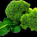 brokkoli010